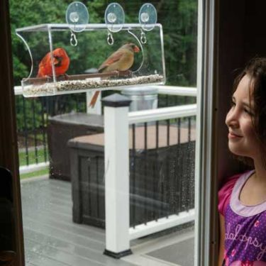 Best Rated Window Feeder Review