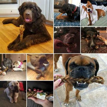Monster chews top rated dog treats