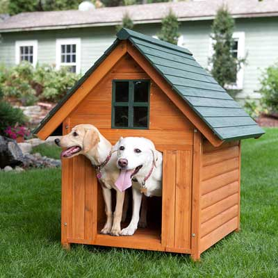 Is your 4 legged friend in the Dog House?