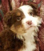 puppy-photo