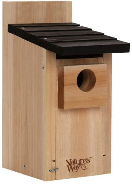Wild bird boxes in your garden